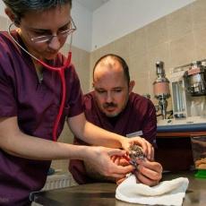Exo-Pet Állatgyógyászati Centrum (Fotó: dr. Perényi János)