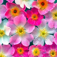 Pongó Virágbolt