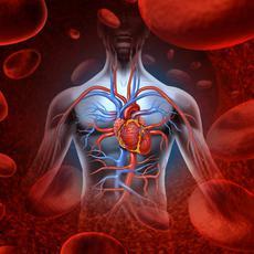 BEMER vérkeringés javító kezelés & Masszázs